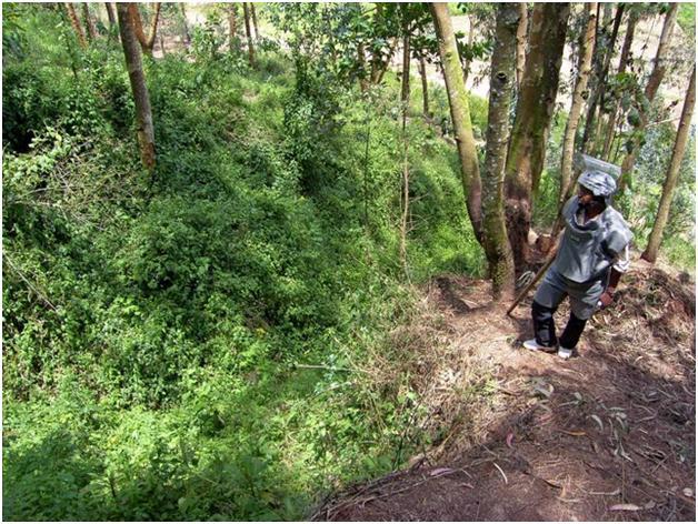 Rwanda%20Forest