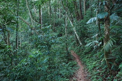 Dense Rainforest on Water Data Page